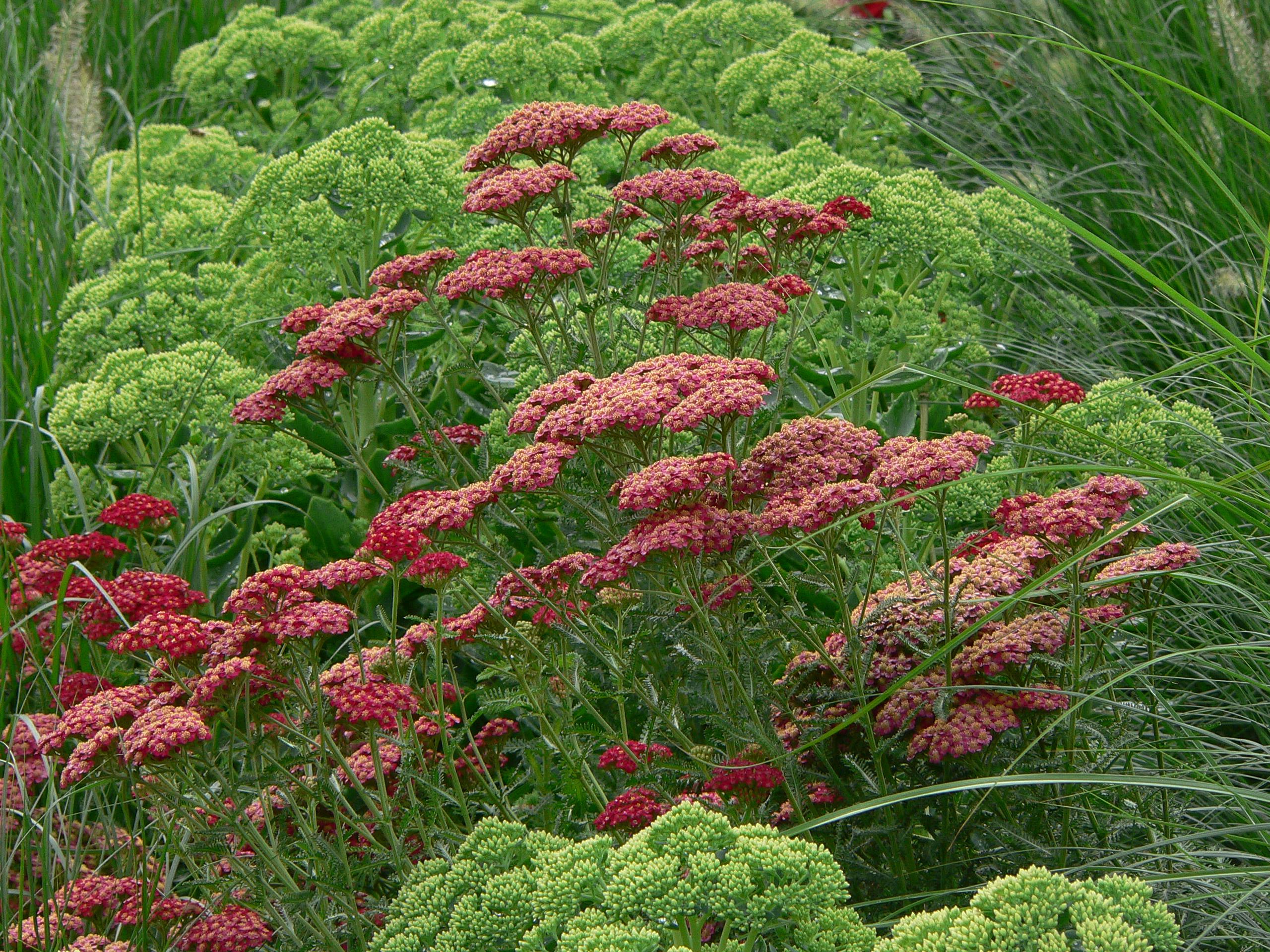 Dise o de jardines jardinarias dise o decoraci n y mantenimiento - Disenador de jardines ...